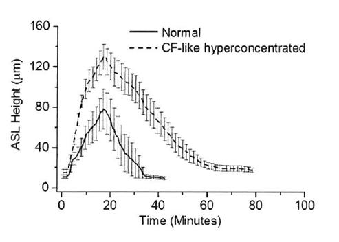 Neue Erkenntnisse zur Wirkung von hypertoner Salzlösung am Modell der menschlichen Lungenzellen (Human Bronchial Epithelium, HBE)