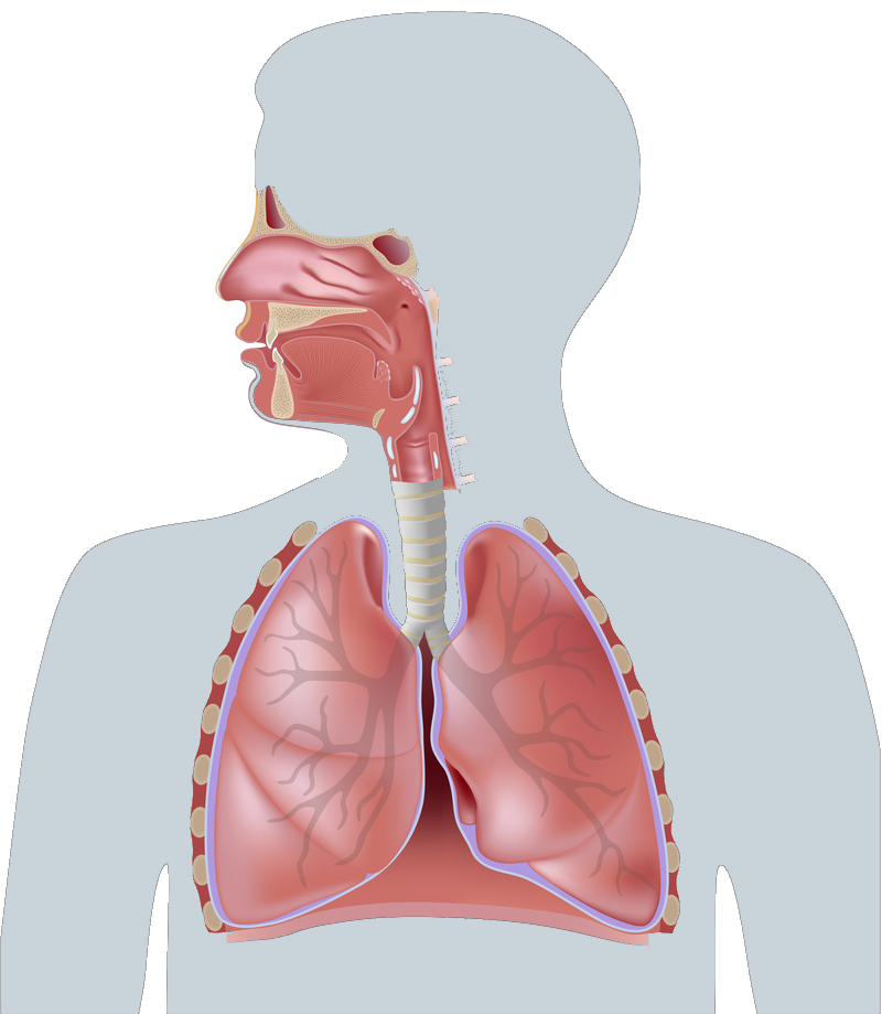 Find The Right Inhalation Device